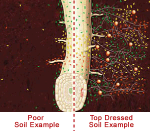 lawn top dressing root comparison