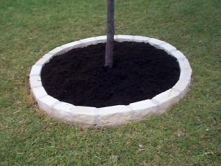 Limestone tree ring