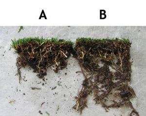 root comparison