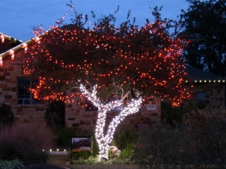 Tree Wrap with Red & White LEDs
