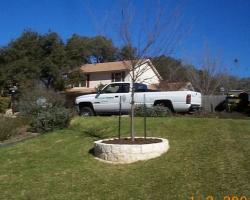 limestone raised tree ring