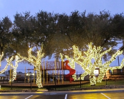 Austin Java Live Oaks LED Tree Wrap
