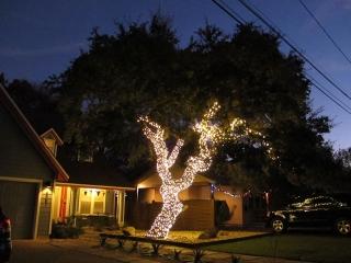 Ethel Street Live Oak LED Lighting Wrap