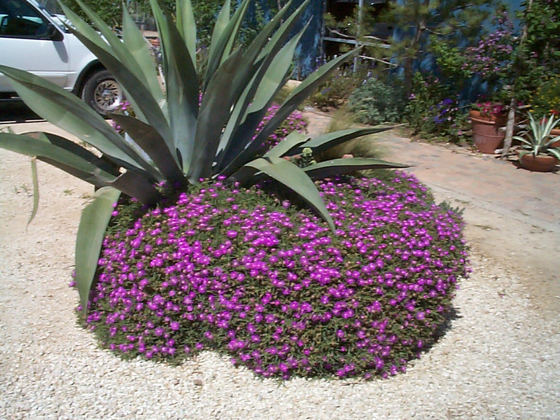 Perennial Plants For Austin Photos Of Perennials For The