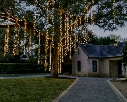 Spanish Moss Tree Lights