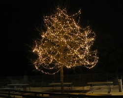 HWY 290 Red Oak