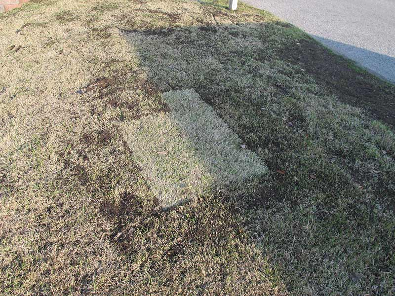 Top Dressing in Austin, TX: Like Organic Steroids for Your Lawn!
