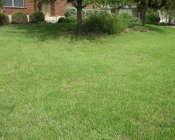 Lawn Top Dressing: Step 5 - 7 days without irrigation
